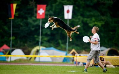 Manifest za pohybový aparát psa